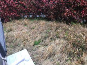 芝刈り前 植木刈り込み前