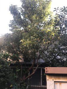 植木伐採物置解体前横浜現場